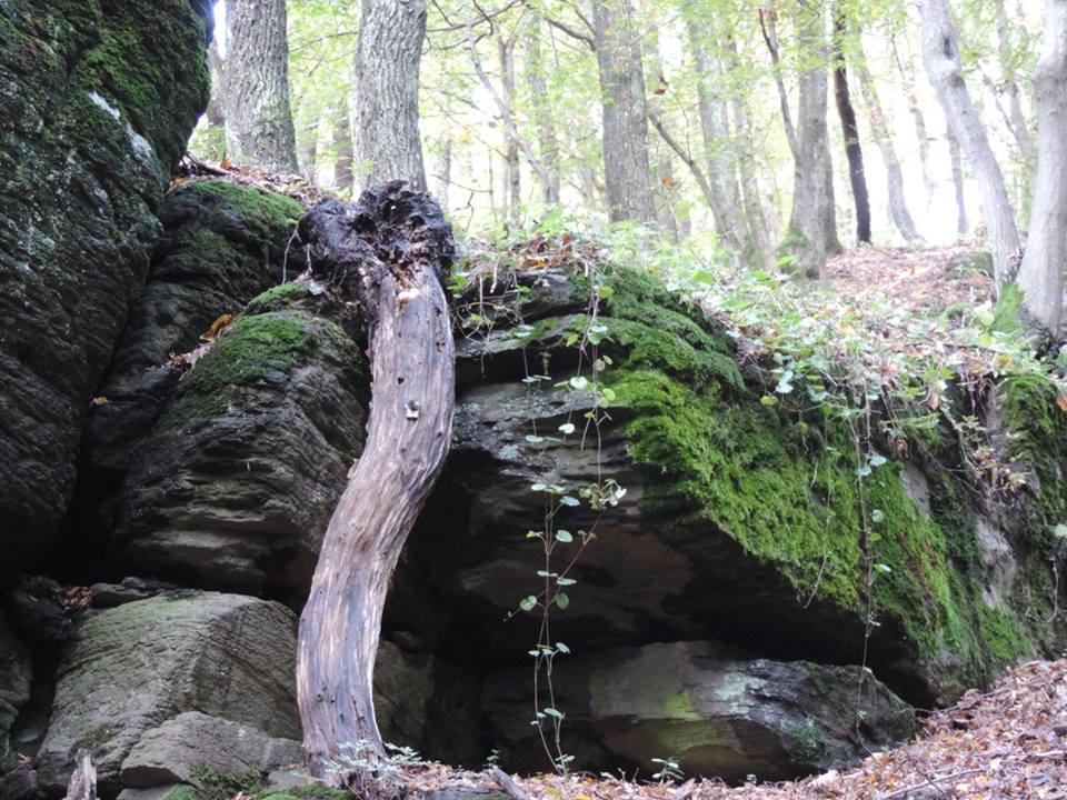 Erdő mélye