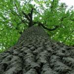 Nevelj fát!