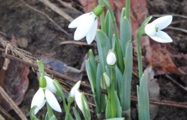Tavasz van, gyönyörű