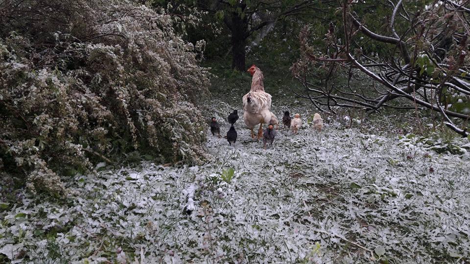 áprilisi hó04201