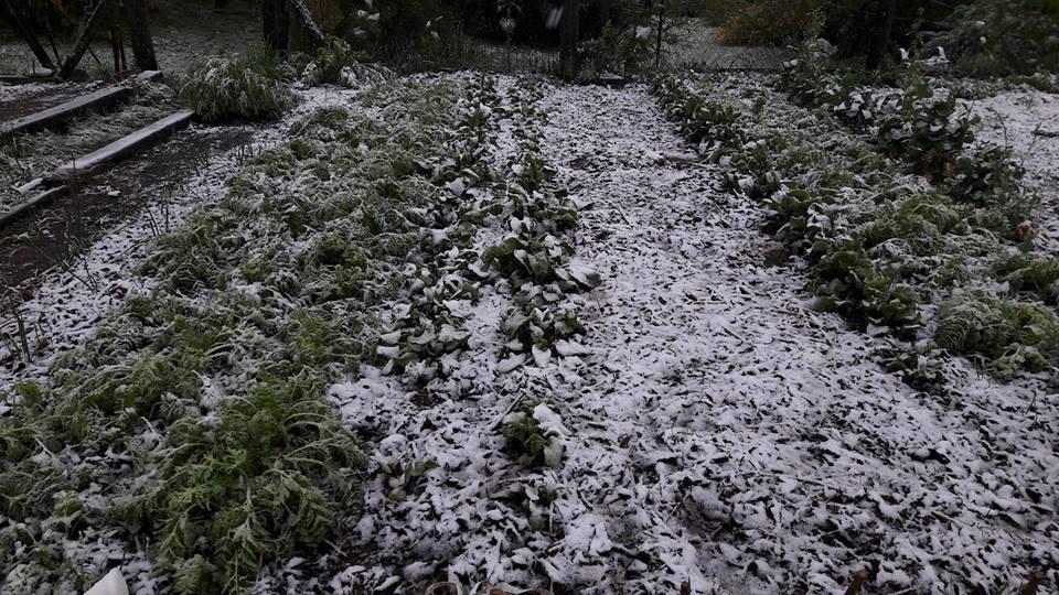 áprilisi hó04207