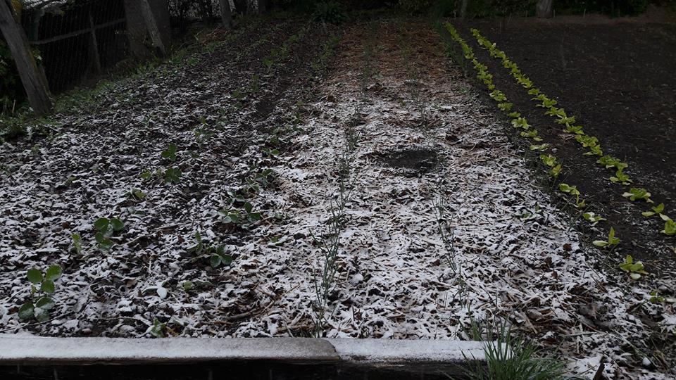 áprilisi hó04208