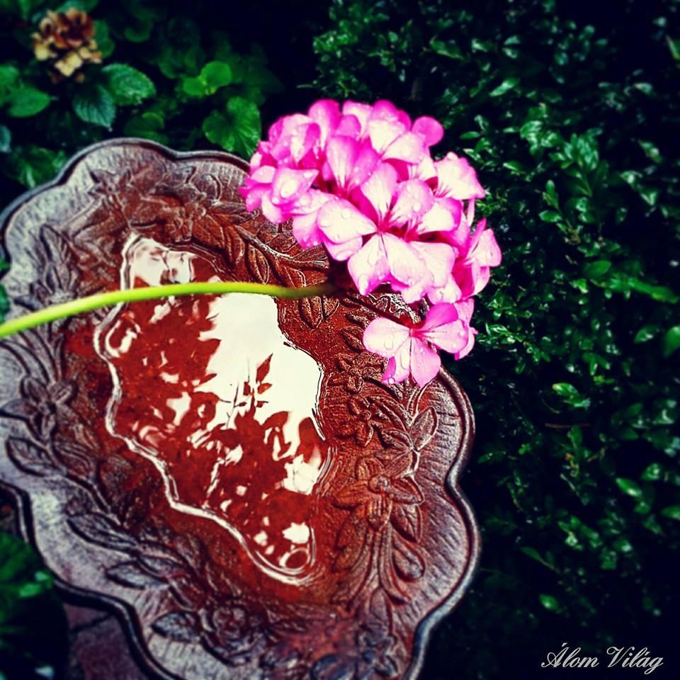 Reggeli kert