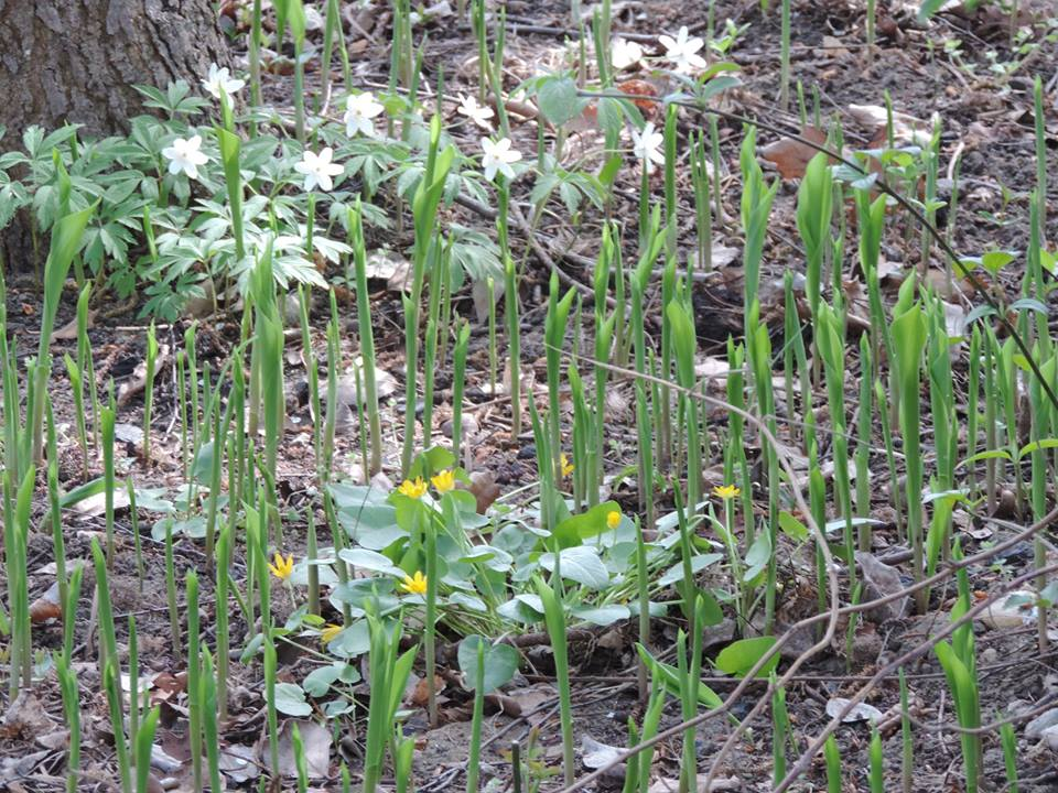 tavaszló természet11
