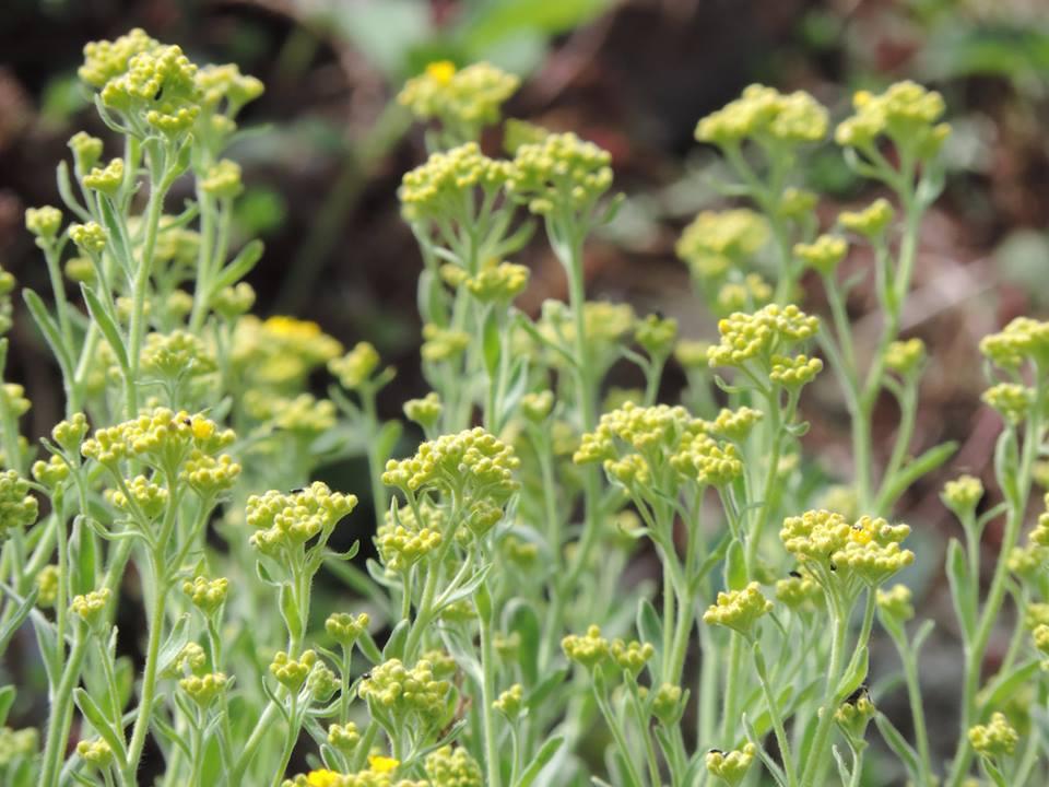 tavaszló természet12