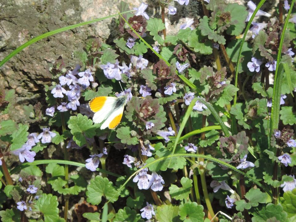 tavaszló természet15