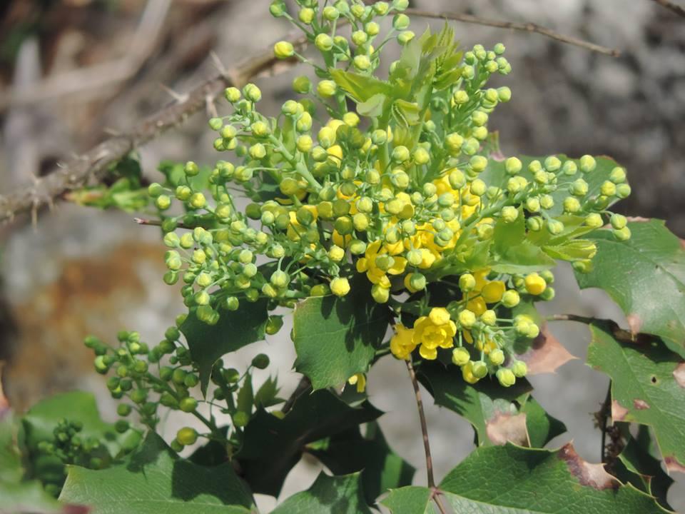 tavaszló természet3