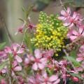 tavaszló természet4