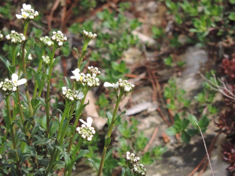 tavaszló természet5