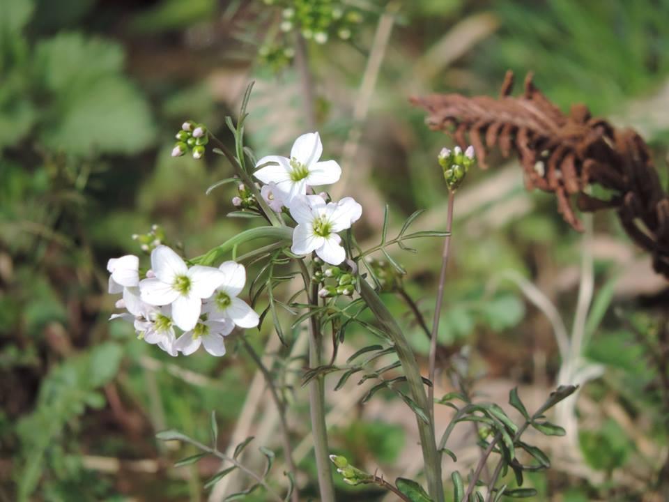tavaszló természet6