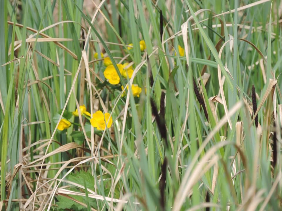 tavaszló természet8