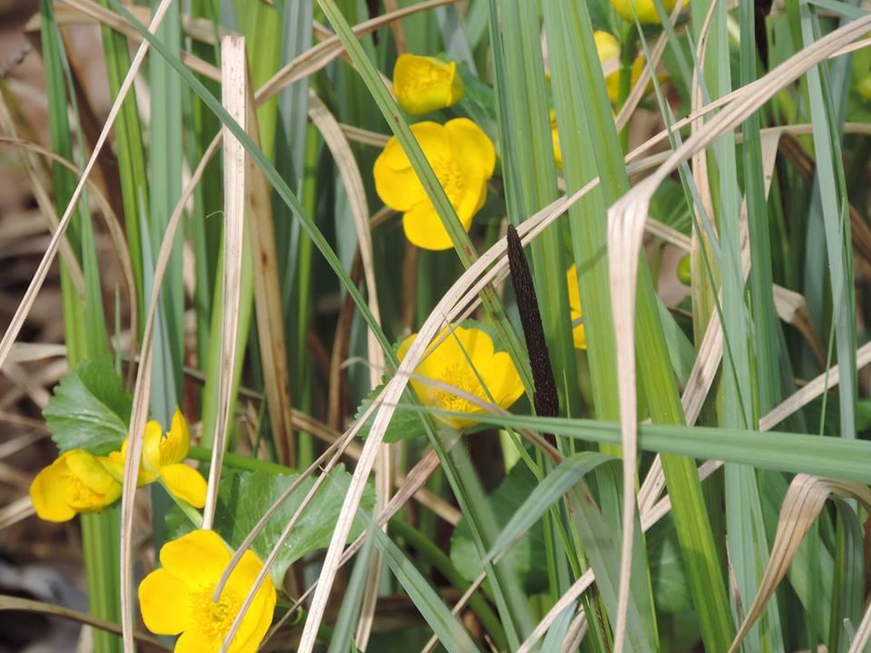 tavaszló természet9