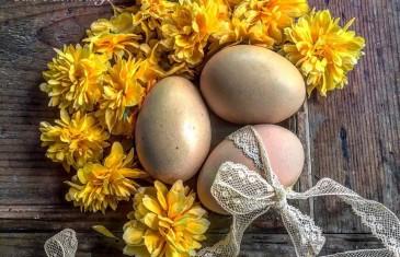 Húsvét reggel