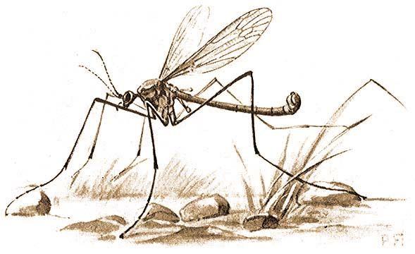 Szúnyogmentes övezet