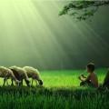 juhok furulyázó fiúval