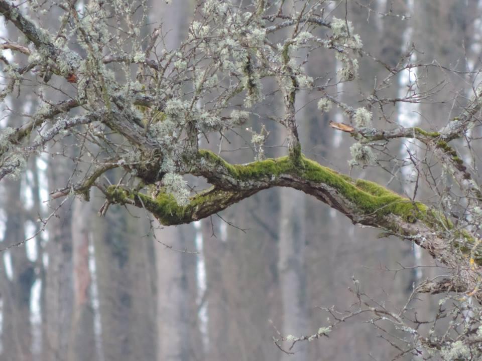 fák innenonnan02