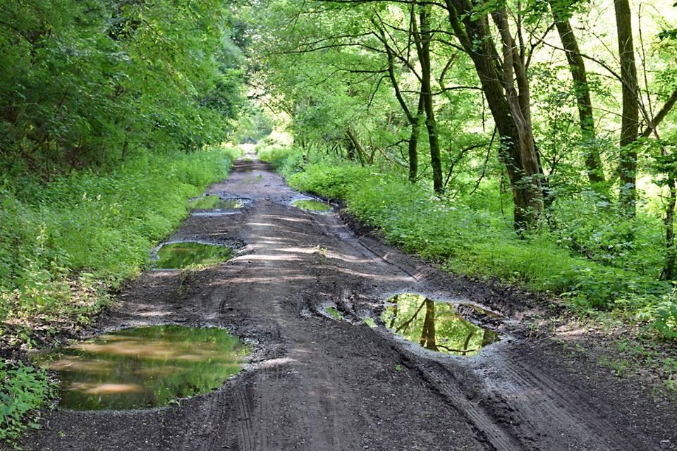 csodalepke sáros út