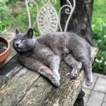 Pihentető