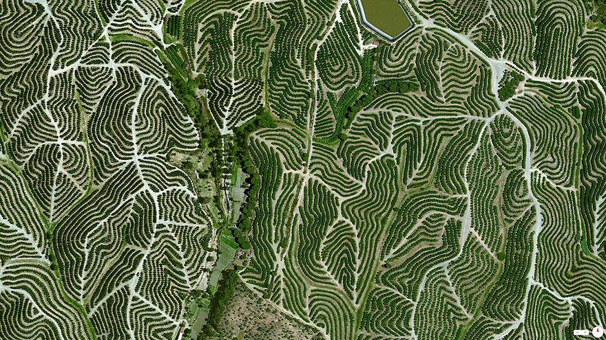 Szőlőbirtok-Huelva-Spanyolország