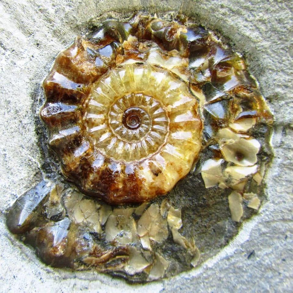 kalcit kristályosodott ammonitesz